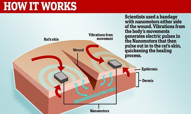 Bandage that generates electricity helps cuts heal FOUR TIMES faster