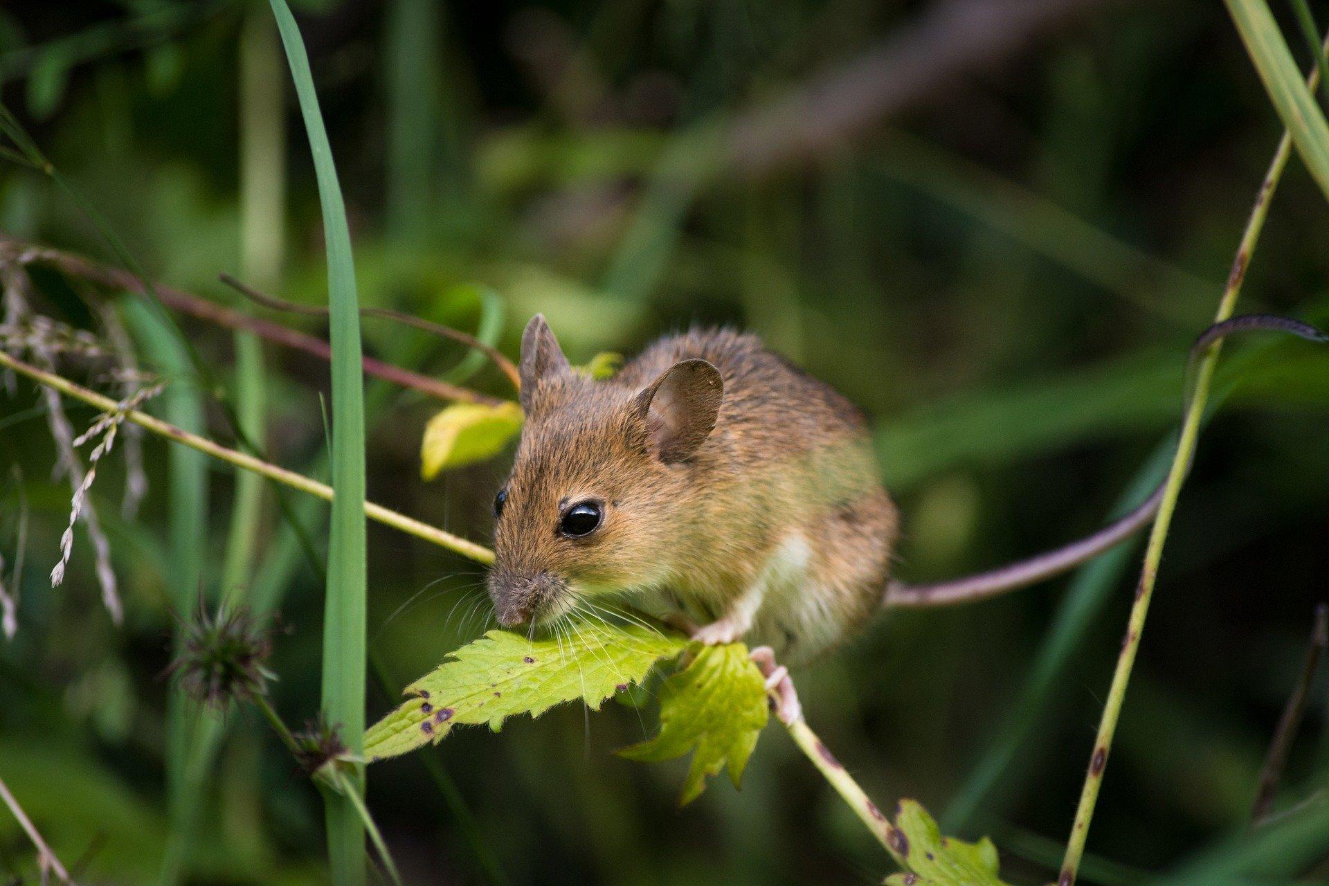 300 blind mice uncover genetic causes of eye disease