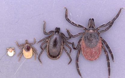 Ticks-Alarm in 2019: scientists warn of new dangerous infectious diseases