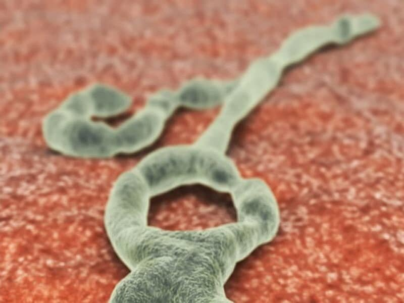 U.S. doctor released from Omaha hospital after Ebola monitoring