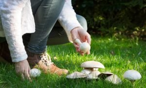 Discovered: mushroom-eating brings to our memory on the trot