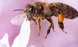 Doctors reportedly find four bees living in woman's eye, feeding off her tears