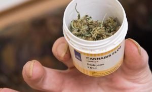 Cannabis on prescription: health insurance doubt marijuana therapy