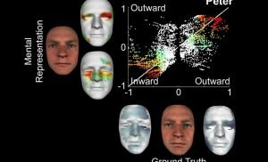 Neuroscientists 3-D model 'face identity information' stored in the brain