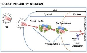 Mutation that causes rare muscle disease protects against HIV-1 infection