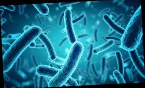 Disease X: How UK virus hunters are tracking down viruses sweeping Britain
