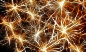 New insight into motor neuron death mechanisms could be a step toward ALS treatment