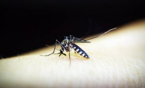 Small bite, big threat: Simple ways to protect yourself from mosquitoes