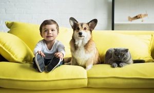 Notes for pet-lovers: Don't risk young children to dog bites