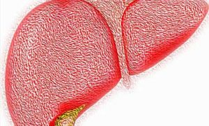 High-fructose and high-fat diet damages liver mitochondria, study finds