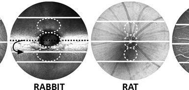 Suitable marker for retina morphology across species