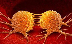 Cancer: Novel compound halts Tumor growth – Naturopathy naturopathy specialist portal