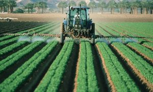 Dozens of pesticides linked with mammary gland tumors in animal studies