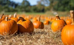 8 Fall Activities You Can Still Enjoy During Covid