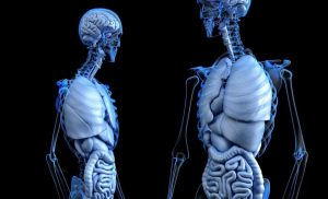 Rejuvenating old organs could increase donor pool