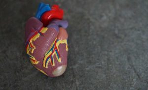 Mothers' lifestyle predicts when offspring will have first heart attack or stroke