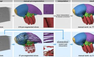 Making sense of what you see in biomedical images