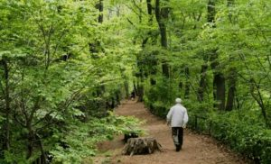 A regular dose of nature may improve mental health during the COVID-19 pandemic