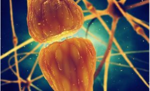 What are Neurotransmitters?