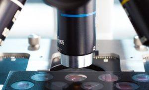 Single Plane Illumination Microscopy (SPIM) in Cell Biology