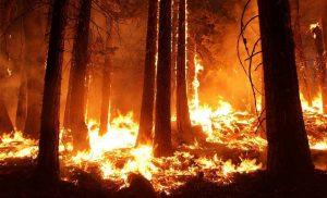 Poorer mental health smolders after deadly, devastating wildfire