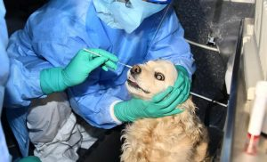 South Korean dog has its coronavirus test day