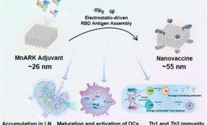 Researchers develop novel nanoadjuvant COVID-19 vaccine candidate