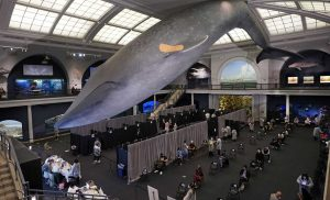 Whale of a time: NYC offers walk-up vaccinations for all