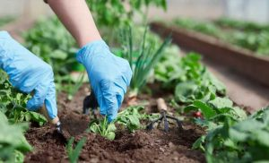 Here's What You Need To Know Before You Plant A Garden This Summer