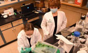 New human coronavirus that originated in dogs identified