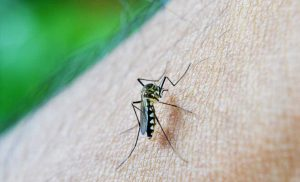 Pyrethroid plus bed nets reduce malaria infection in areas of high resistance