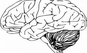 Researchers discover fundamental roles of glucosamine in brain