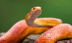 What It Really Means When You Dream About Snakes