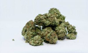 Cannabis intoxication and rates of accidental ingestion in young children rise after legalization, new study finds