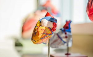 Converting scar tissue to heart muscle after a heart attack