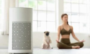 Air Purifier Vs. Humidifier: What's The Difference?